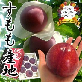 お中元 すもも ギフト 山梨産 プラム 貴陽(きよう)スモモ 6~9個入