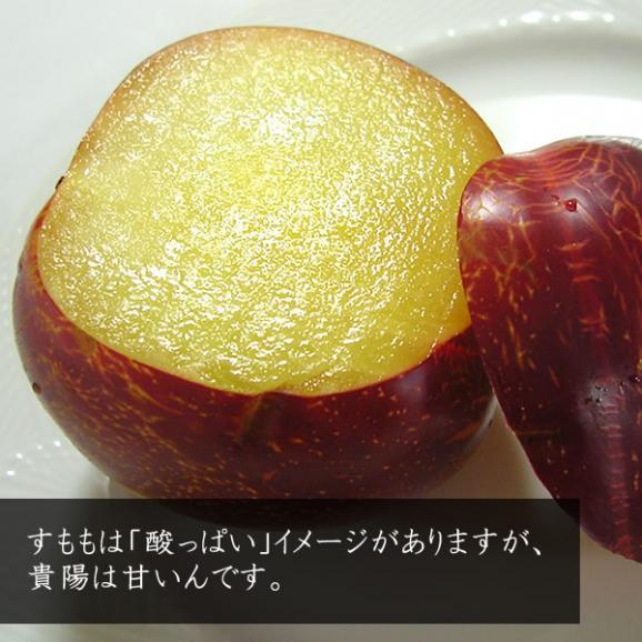 お中元 すもも ギフト 山梨産 プラム 貴陽(きよう)スモモ 6~9個入03
