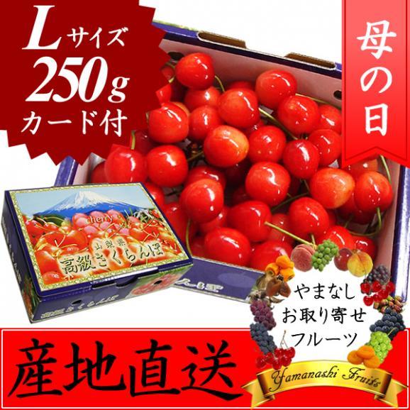 母の日 プレゼント フルーツ さくらんぼ 佐藤錦・高砂 L 250g01