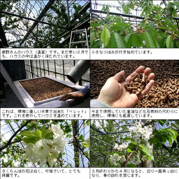 母の日 プレゼント フルーツ さくらんぼ 佐藤錦・高砂 L 250g04