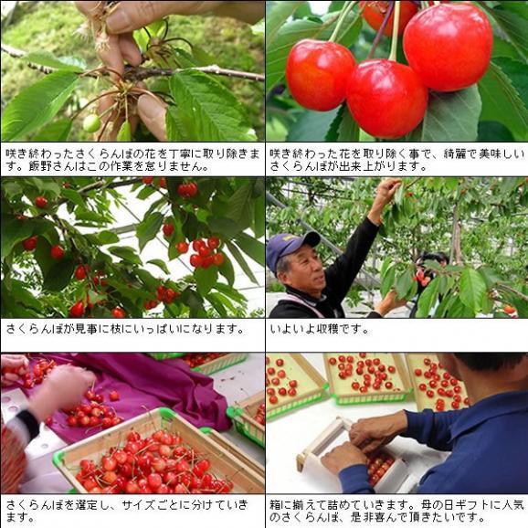 母の日 プレゼント フルーツ さくらんぼ 佐藤錦・高砂 L 250g05