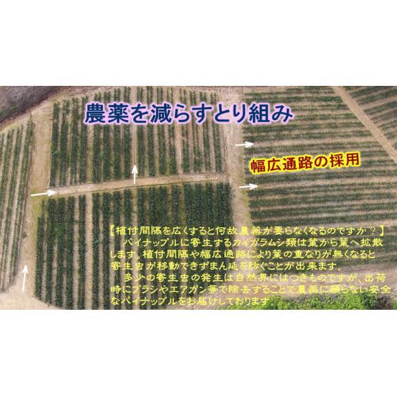 ピーチパイン 【2玉セット】05