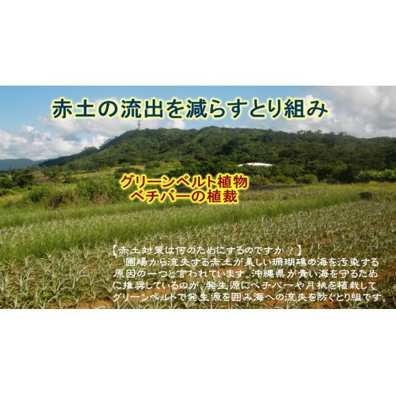 ピーチパイン 【4玉セット】06