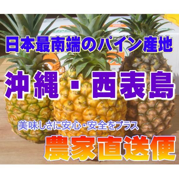 《全国送料無料》蜜入り!ピーチパイン【6玉セット】01