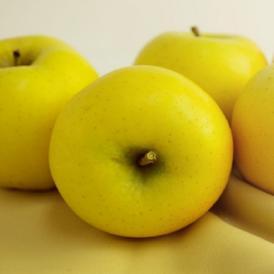 青森りんご シナノゴールド 9kg(26~40個)