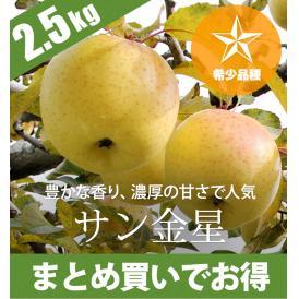 希少品種 青森りんご サン金星 2.5kg(6~10個)