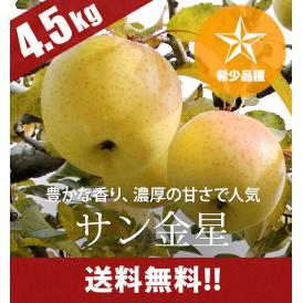 希少品種 青森りんご サン金星4.5kg(14~20個)