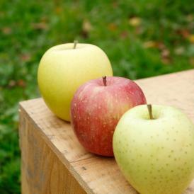 通常品りんご 葉とらずふじ・シナノゴールド2種詰め合わせ 9kg(26~40個)