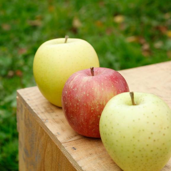 通常品りんご 葉とらずふじ・シナノゴールド2種詰め合わせ 9kg(26~40個)01