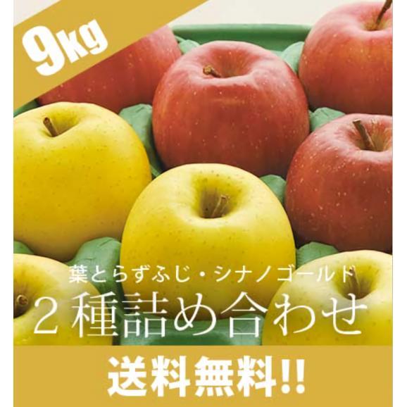通常品りんご 葉とらずふじ・シナノゴールド2種詰め合わせ 9kg(26~40個)02