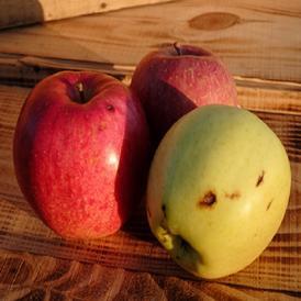 ワケアリリンゴ