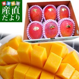 沖縄県より産地直送 JAおきなわ 完熟沖縄マンゴー 約2キロ (4玉から7玉入) 送料無料 まんごー アップルマンゴー