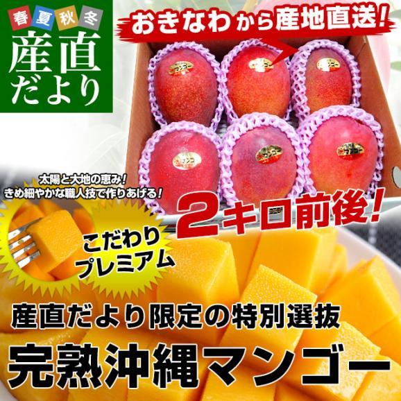 沖縄県より産地直送 JAおきなわ 完熟沖縄マンゴー 約2キロ (4玉から7玉入) 送料無料 まんごー アップルマンゴー02