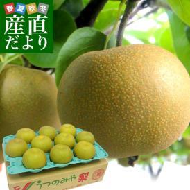 送料無料 栃木県より産地直送 JAうつのみやの梨 大玉限定 4Lサイズ以上 秀品 約5キロ (7玉から12玉) なし ナシ
