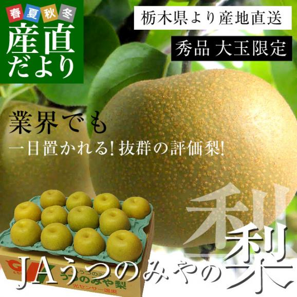栃木県より産地直送 JAうつのみやの梨 大玉限定 4Lサイズ以上 秀品 約5キロ (7玉から12玉) 送料無料 ※品種をお選びください。02