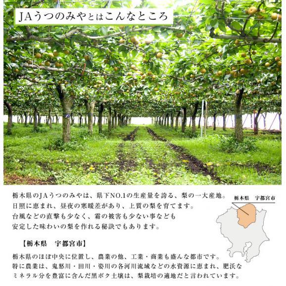 栃木県より産地直送 JAうつのみやの梨 大玉限定 4Lサイズ以上 秀品 約5キロ (7玉から12玉) 送料無料 ※品種をお選びください。04