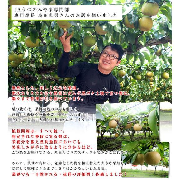 栃木県より産地直送 JAうつのみやの梨 大玉限定 4Lサイズ以上 秀品 約5キロ (7玉から12玉) 送料無料 ※品種をお選びください。05