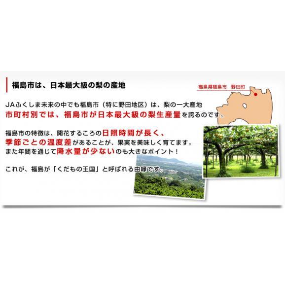 福島県より産地直送 JAふくしま未来の梨 (あきづき梨)約3キロ(6玉から10玉) 送料無料 なし 梨 ナシ05