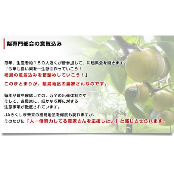 福島県より産地直送 JAふくしま未来の梨 (あきづき梨)約3キロ(6玉から10玉) 送料無料 なし 梨 ナシ06