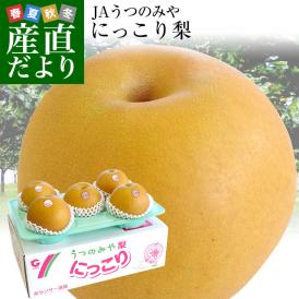 農家さんの理想の梨!栃木県宇都宮市の巨大梨