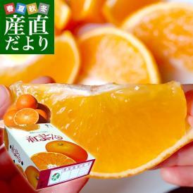 愛媛県より産地直送 JAえひめ中央 紅まどんな 秀品 3LからLサイズ 約3キロ(10玉から15玉) 送料無料 紅マドンナ オレンジ