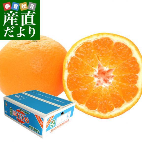送料無料 愛媛県より産地直送 JAえひめ中央 はれひめ 2LからLサイズ 約5キロ(28玉から43玉) オレンジ 柑橘類 みかん01