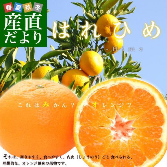 愛媛県より産地直送 JAえひめ中央 はれひめ 2LからLサイズ 約5キロ(28玉から43玉) 送料無料 オレンジ 柑橘類 みかん02