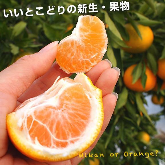 送料無料 愛媛県より産地直送 JAえひめ中央 はれひめ 2LからLサイズ 約5キロ(28玉から43玉) オレンジ 柑橘類 みかん04