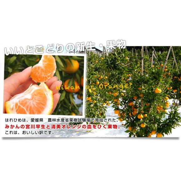 送料無料 愛媛県より産地直送 JAえひめ中央 はれひめ 2LからLサイズ 約5キロ(28玉から43玉) オレンジ 柑橘類 みかん05