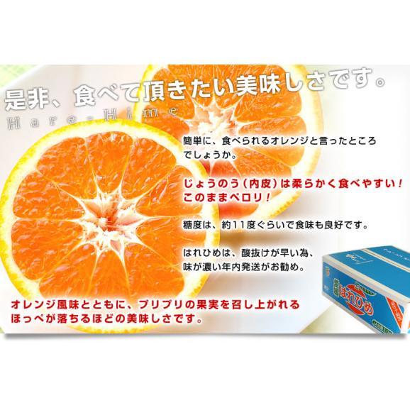 送料無料 愛媛県より産地直送 JAえひめ中央 はれひめ 2LからLサイズ 約5キロ(28玉から43玉) オレンジ 柑橘類 みかん06