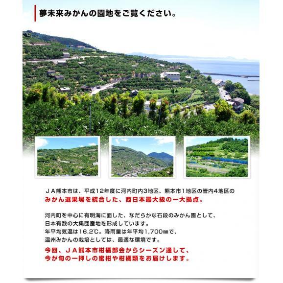 送料無料 熊本県より産地直送 JA熊本市 夢未来プレミアムみかん 夢の恵 LからSサイズ 5キロ(40玉から60玉) 04