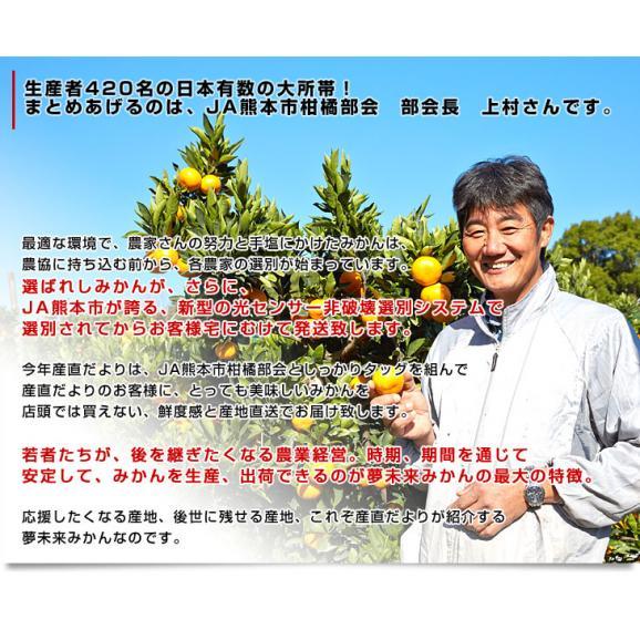 送料無料 熊本県より産地直送 JA熊本市 夢未来プレミアムみかん 夢の恵 LからSサイズ 5キロ(40玉から60玉) 06