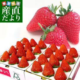 静岡県より産地直送 JA伊豆の国 紅ほっぺ 超特大タイプ 450g(9から15粒)×2P いちご イチゴ 苺 ※クール便発送 送料無料