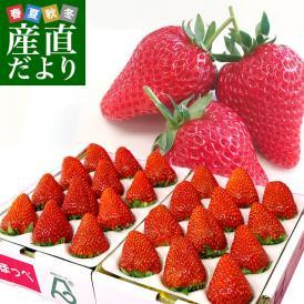 静岡県より産地直送 JA伊豆の国 紅ほっぺ 大粒タイプ 900g (9粒から15粒入り×2P)送料無料 いちご イチゴ 苺 ※クール便発送