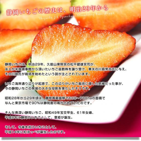 静岡県より産地直送 JA伊豆の国 紅ほっぺ DX 約560g (280g×2P) いちご イチゴ 苺 ※クール便発送 送料無料06