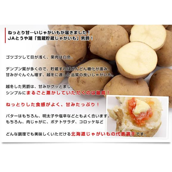 北海道より産地直送 JAとうや湖 雪蔵貯蔵じゃがいも (男爵) Mサイズ 10キロ  送料無料 芋 ジャガイモ 馬鈴薯 04