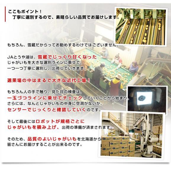 北海道より産地直送 JAとうや湖 雪蔵貯蔵じゃがいも (男爵) Mサイズ 10キロ  送料無料 芋 ジャガイモ 馬鈴薯 05