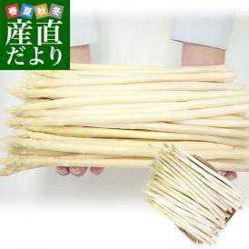 送料無料 北海道より産地直送 赤井川村滝本農場のJAS有機認定ホワイトアスパラ  MからSサイズ 700g