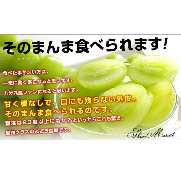 山梨県または長野県産 シャインマスカット1.2キロ(2房から3房)06