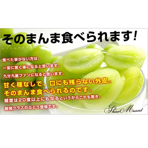 山梨県または長野県産 シャインマスカット1キロ(2房から3房)送料無料 ぶどう ブドウ 種なしぶどう06