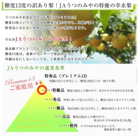 送料無料 栃木県より産地直送 JAうつのみや 幸水梨 糖度13度以上の特優 (ご家庭用プレミアム13) 約5キロ (10玉から16玉) なし ナシ03