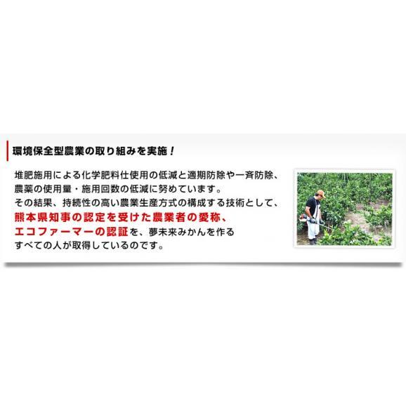 お一人様2箱まで!送料無料 熊本県より産地直送 JA熊本市 夢未来 極旨小玉みかん 5キロ(60個から80個)05