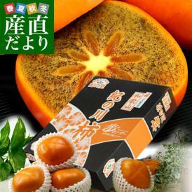 和歌山県より産地直送 JA紀の里 黒あま 2キロ(8玉から9玉) 送料無料 カキ かき 柿