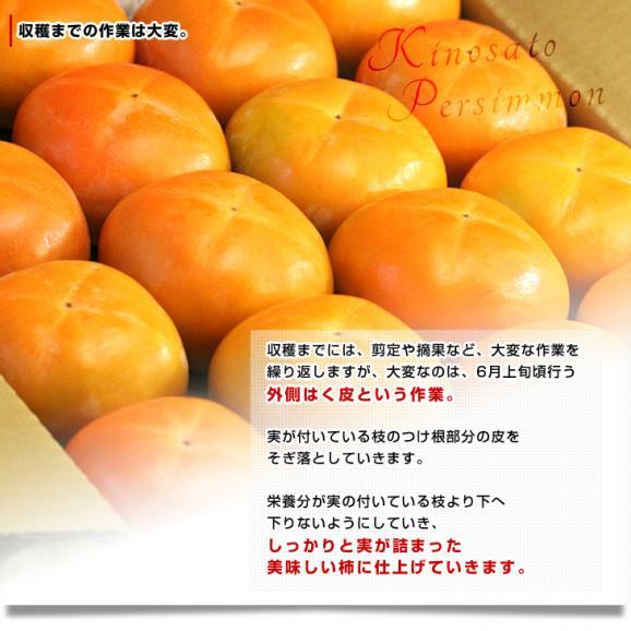 和歌山県より産地直送 JA紀の里 黒あま 2キロ(8玉から9玉) 送料無料 カキ かき 柿 御歳暮 ギフト05