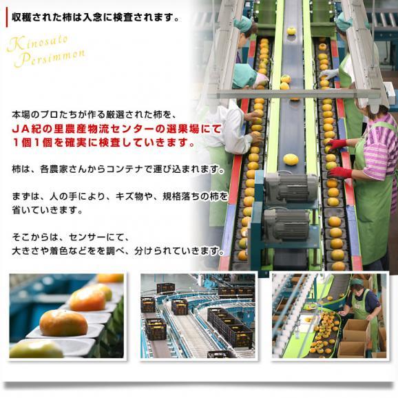 和歌山県より産地直送 JA紀の里 黒あま 2キロ(8玉から9玉) 送料無料 カキ かき 柿 御歳暮 ギフト06
