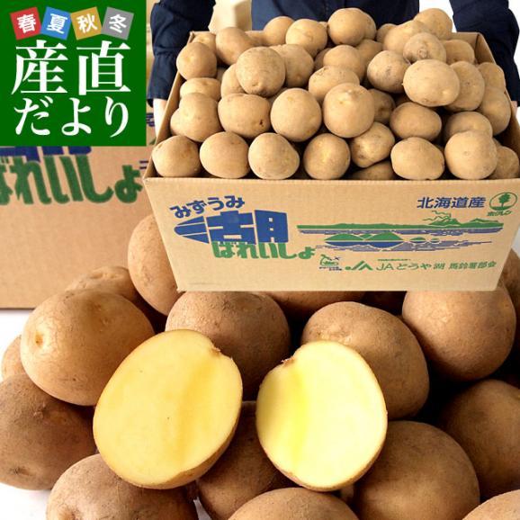 北海道から産地直送 JAとうや湖 じゃがいも 湖ばれいしょ「とうや」 Mサイズ 10キロ 馬鈴薯 ジャガイモ 送料無料01