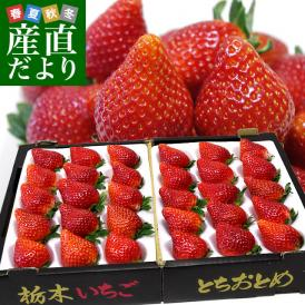 栃木県より産地直送 JAかみつが 本場の栃乙女 3L超級の超大粒 1キロ (12粒から15粒×2P) いちご イチゴ 苺 送料無料 上都賀