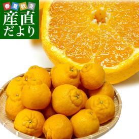 送料無料 熊本県から産地直送 JAあまくさ 露地デコポン 2LからLサイズ 5キロ(20玉から24玉前後)