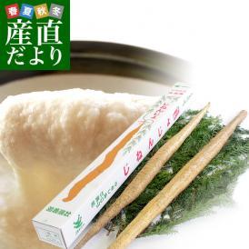 送料無料 佐賀県より産地直送 JAからつ 自然薯 2本入 約1キロ 化粧箱 じねんじょ 山芋 やまいも