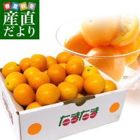 宮崎県から産地直送 JA宮崎中央 たまたま 2Lサイズ 1キロ (約40玉) 送料無料 きんかん 金柑 完熟きんかん